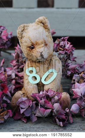 cute old and scruffy vintage teddy bear holding a paper cut number eighty  sat on a wooden weathered bench , surronded by dried pink hydrangea