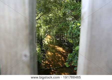 Looking through two planks into green lush foliage