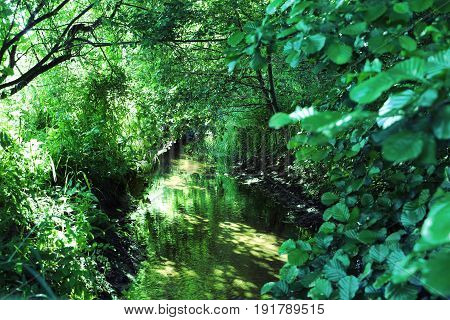 Lush green foliage with a little river