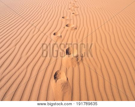 Footprints on a dune on the Namib Desert Namibia. Close up.