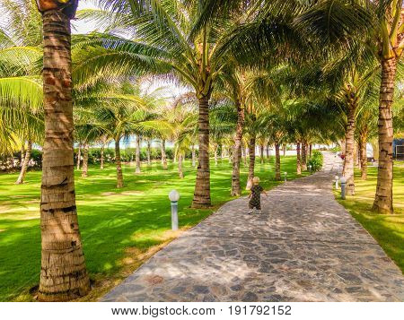 Road at tropical resort with palms and groomed lawn, Vietnam, Nha Trang
