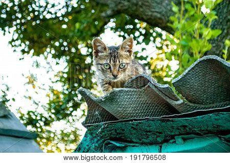 Close up young cute kitten on roof with green trees in background