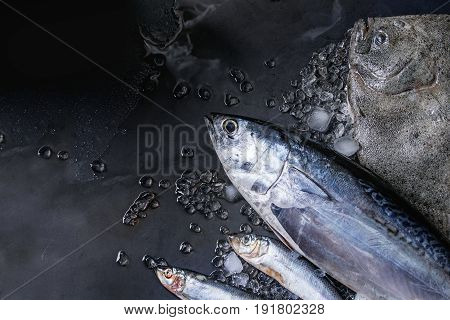 Raw fresh tuna, herring and flounder fish on crushed ice over dark wet metal background. Top view with space