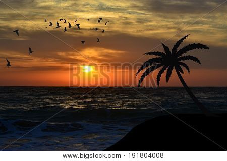 Palm and birds silhouettes on the beach at sunrise