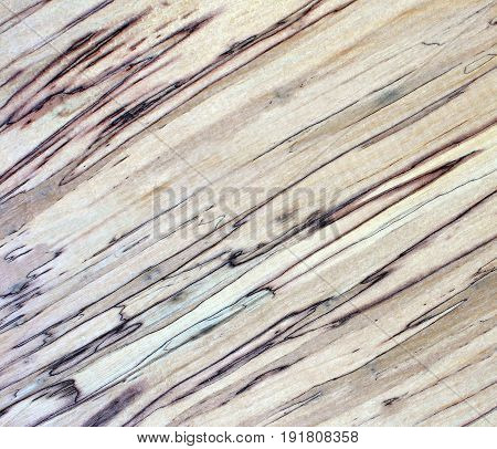 Abstract wood table texture background. Old rotten tree, view from above