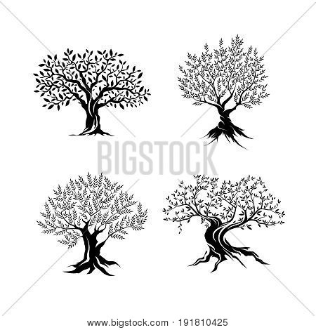 Beautiful magnificent olive tree silhouette isolated on white background. Modern virgin natural plant vector sign. Premium quality illustration organic ecological logo design concept emblem set.