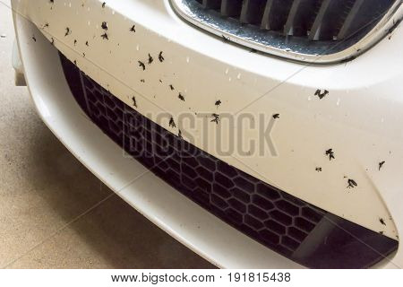 Love bug staining of car bumper to be removed