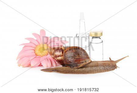 Giant Achatina snail, flower and ampules on white background. Medicine and cosmetology concept
