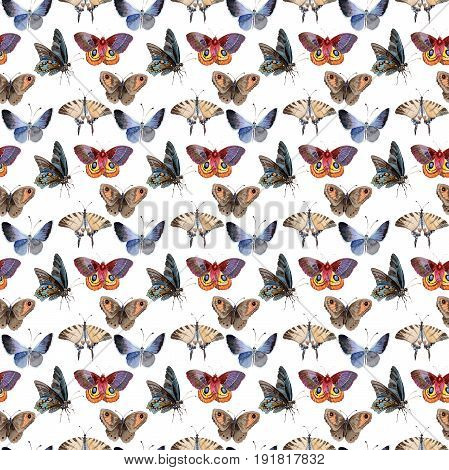 Watercolor butterfly pattern tender insect, intresting moth, isolated wing illustration. Butterfly names: swallowtail, monarch, queen. Aquarelle for background, wrapper pattern, frame or border.