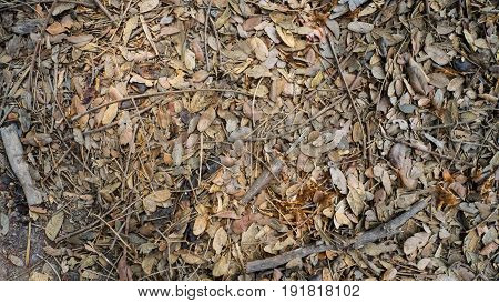 Top view of fallen rotten autumn brown leaves on the ground