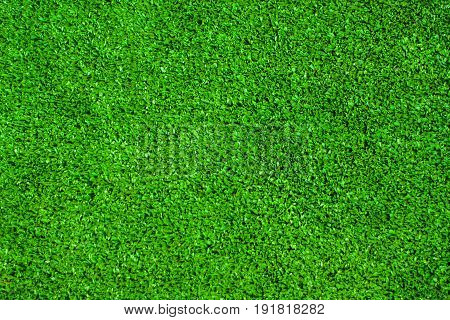 Green leaf of Papyrus abstract background looks beautiful and refreshing.