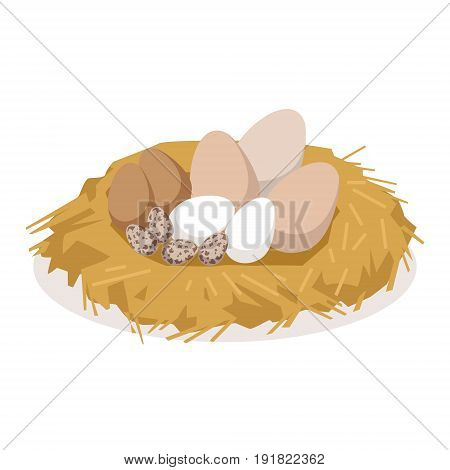 Nest with eggs of different birds, poultry breeding vector Illustration isolated on a white background