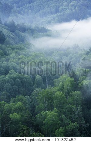 Ecological place Berdsky rocks . Early foggy morning. Pine trees in the fog. Russia, Siberia, Novosibirsk region, Iskitimsky district.