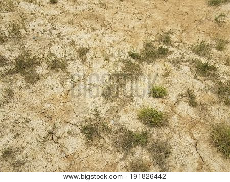 dry brown dirt area with green grasses growing