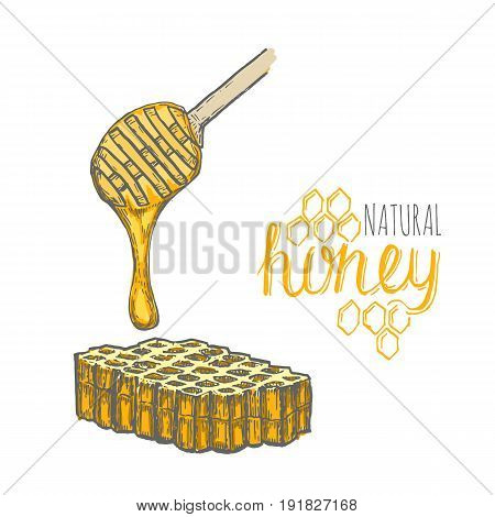 Hand drawn honey stick and honey comb over white background. Vector illustration