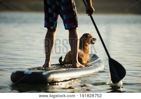 Dog lying on stand up paddleboard with man paddling