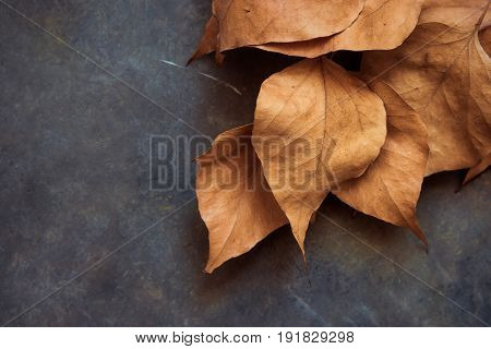 Dead golden autumn leaves on dark concrete background corner border fall Thanksgiving Halloween card poster template copy space