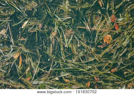 Pollution Of The Lake With Algae And Dirt