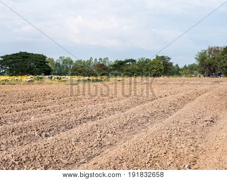 Dry soil furrow for preparation the flower growing in the countryside farm.Thailand