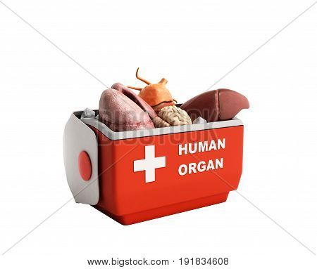 Organ Transportation Concept Open Human Organ Refrigerator Box Red 3D Render On White Background No