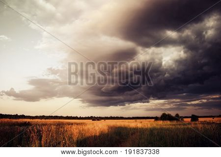 Wheat Field under Dramatic Sky with Dark Clouds, Approaching Thunderstorm, Summer Landscape.