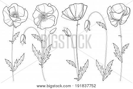 Vector set outline vector photo free trial bigstock vector set with outline poppy flower bud and leaves in black isolated on white background mightylinksfo