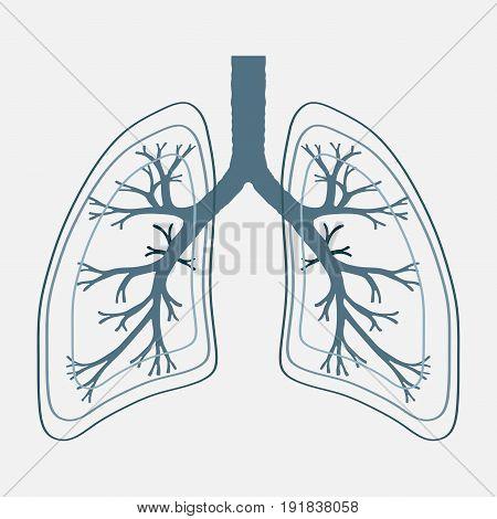 Human Lung anatomy illustration . Illness respiratory cancer graphics.