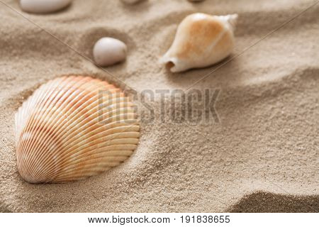 Seashore beach sand background with seashells and starfish top view. Natural sandy texture