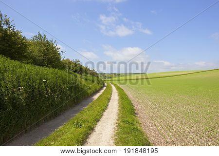 Farm Track And Pea Field