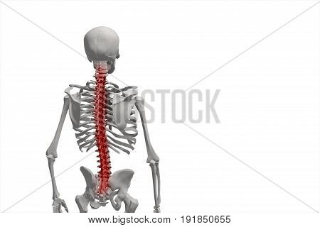 Human Skeleton, Illustration Of The Spine, Back Pain Isolated On White Background 3D Illustration