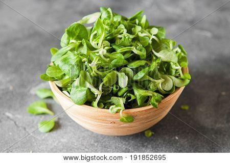Lambs-lettuce
