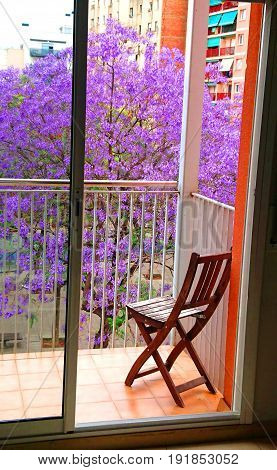 flowering jacaranda trees in the park as seen from your balcony