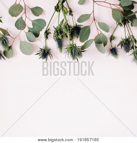 Beautiful eucalyptus branches and eringium flowers on pale pastel pink background. Flat lay top view. Lifestyle composition.