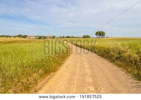 Farm Road And Houses In Vale Seco, Santiago Do Cacem