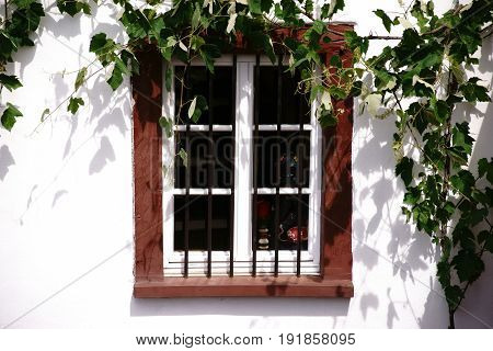 The nostalgic wooden windows of a listed house with iron bars before the frame a bright facade and grape leaves.