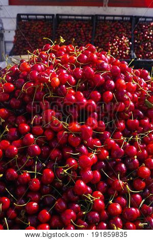 New Harvest Of Fresh Ripe Red Sweet Cherry, Street Market In Italy