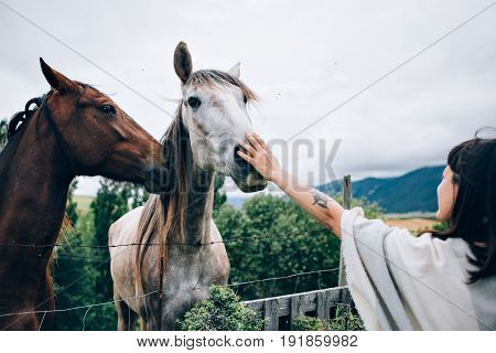 Beautiful young hippie woman tenderly touches nose of two horses one black one white petting them gently and bonding with animals