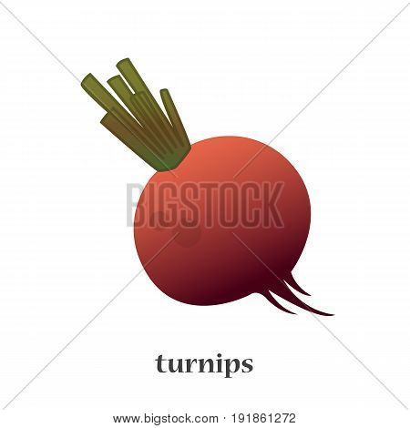 Vector illustration of a turnip close up
