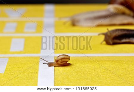 Snails Race On Sports Track Near The Finish Line..concept Of Victory.slowly But Surely.concept Youth
