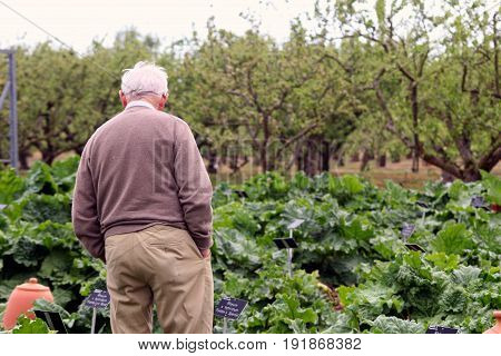 Wisley, Surrey, Uk - April 30 2017: Older Senior Man Walking Among The Vegetables In A Large Garden