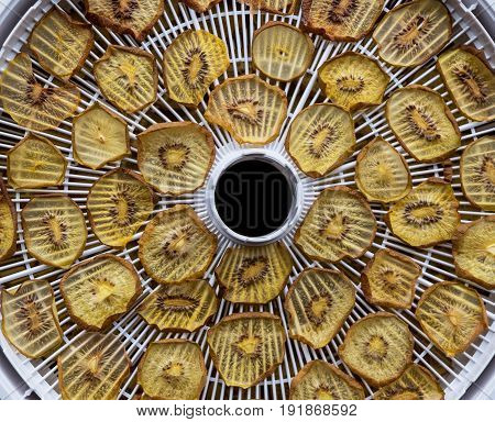 Dried golden kiwi fruit slices on a round food deyhydrator