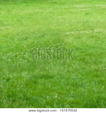 Blured summer green meadow background for your design