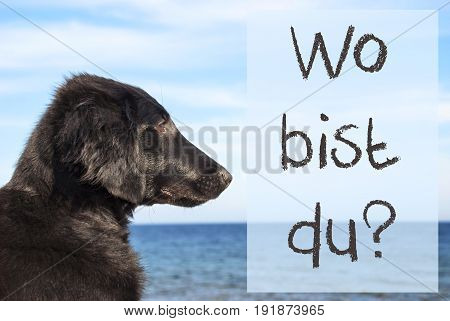 German Text Wo Bist Du Means Where Are You. Flat Coated Retriever Dog Infront Of Ocean. Water In The Background