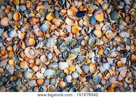sea shells - abstract natural background
