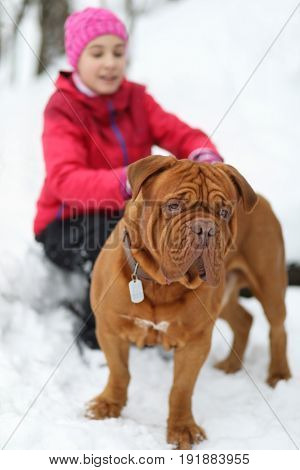 Happy girl plays with brown dog on snow at winter day in park, focus on animal