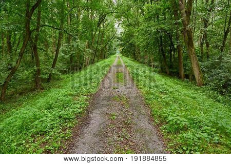 Forest path on a dike