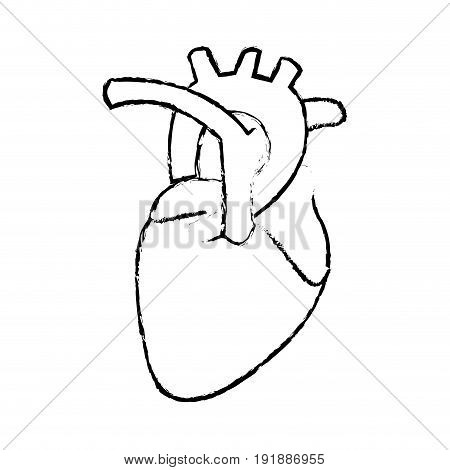 human heart anatomy cardiology healthcare symbol vector illustration