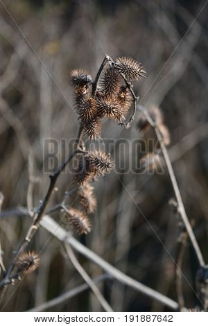 Dry plants with branch with dry nature background
