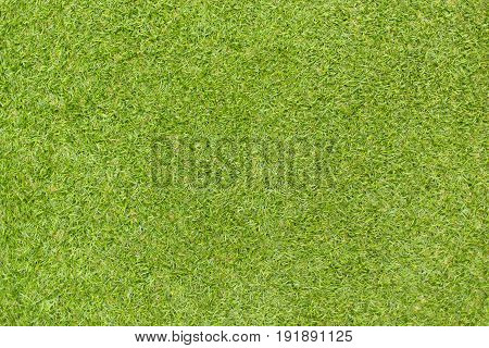 The beautiful Green grass natural background texture.