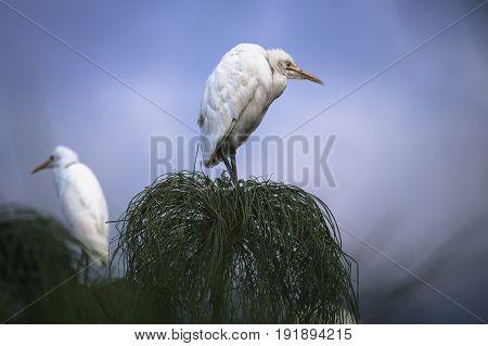 grumpy bird in a tree in Sri Lanka
